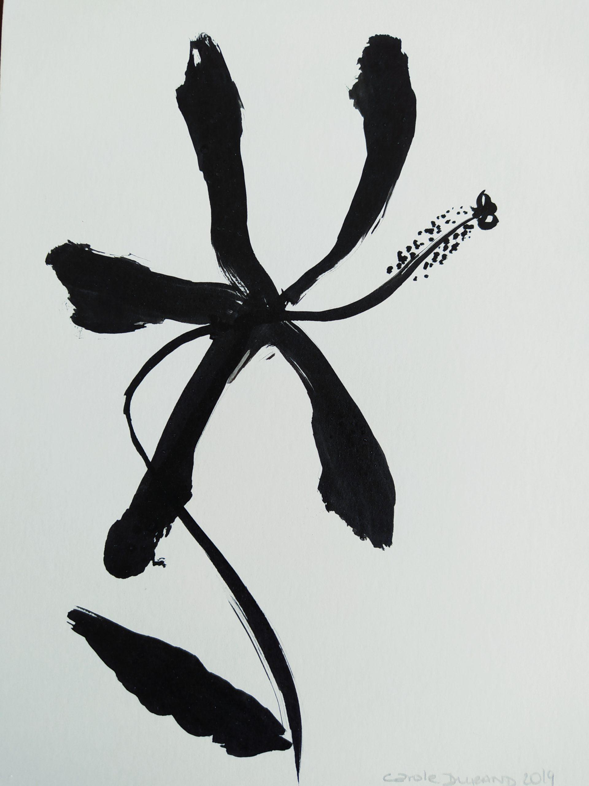 Hibiscus n*1