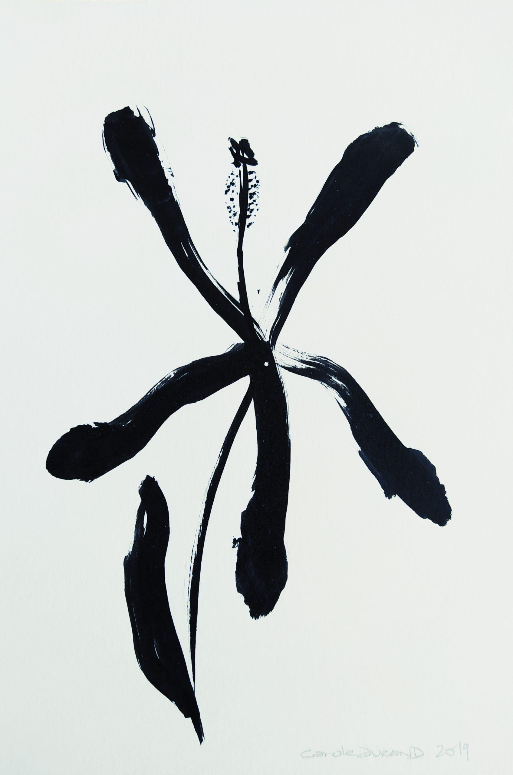 Hibiscus n*2 par Carole Durand